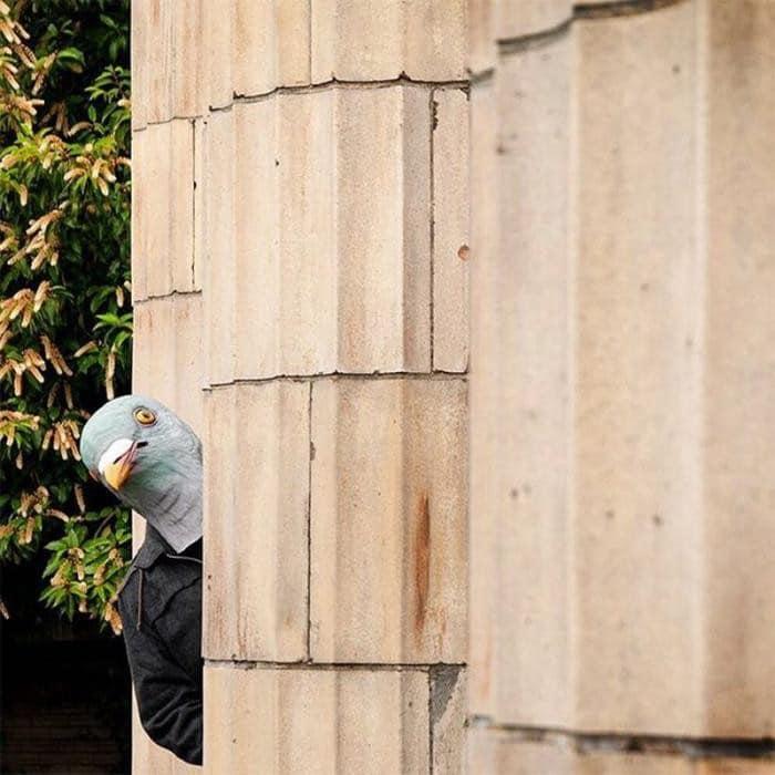 1559240620_chudaki-v-maske-golubja-12.jpg