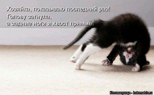 1561138747_kotomatrica-1-1
