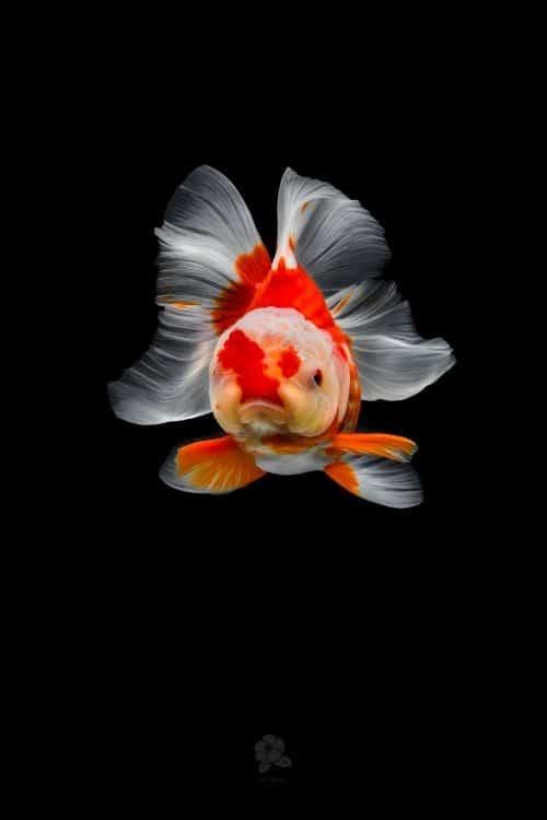 1561576001_zolotye-rybki-1-1