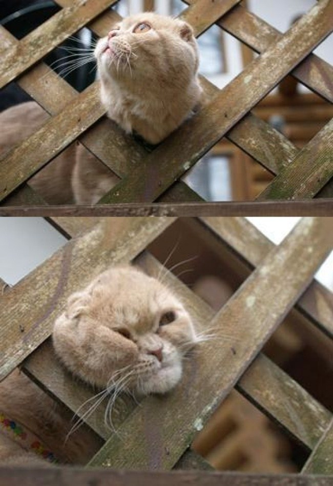 кот застрял головой в заборе