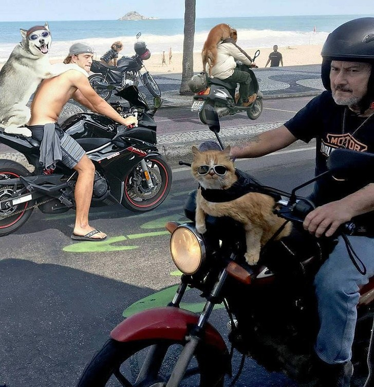 байкеры с животными