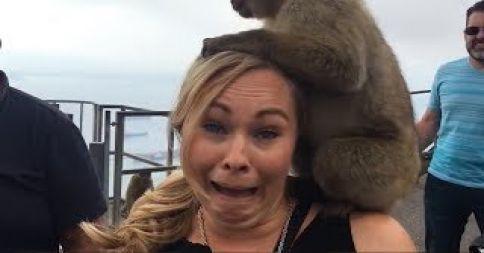 блондинка с обезьяной на голове
