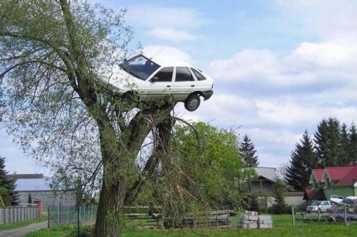 белая машина на дереве