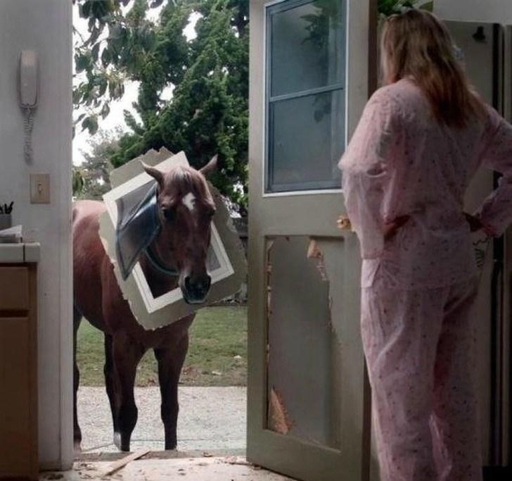 лошадь с куском двери на голове