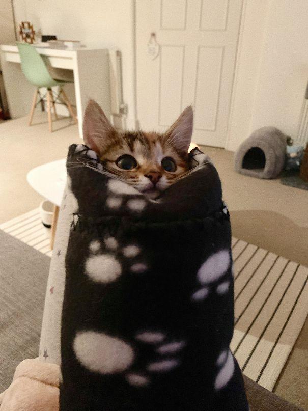котенок завернутый в плед