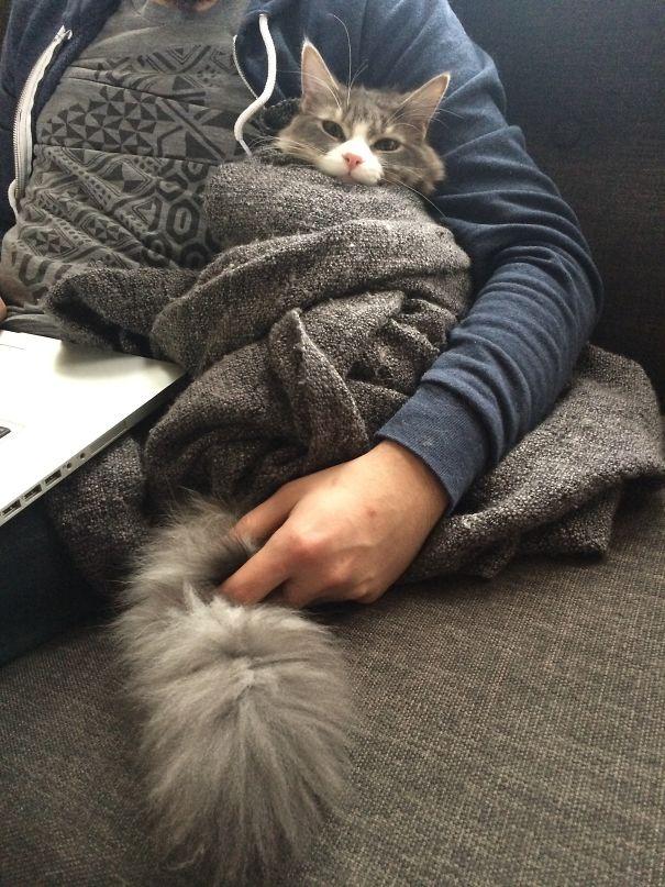 кошка в одеяле