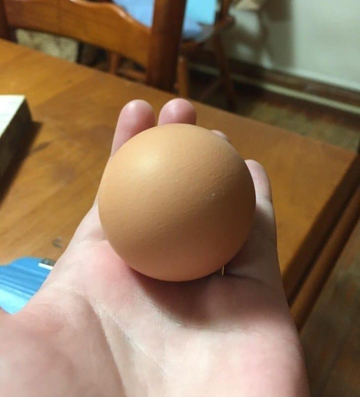 круглое яйцо в ладони