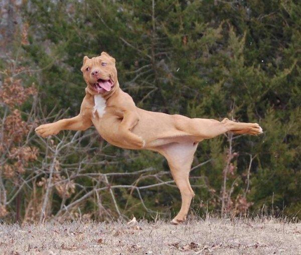 собака в прыжке