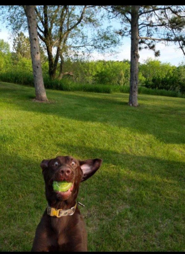 собака поймала мяч