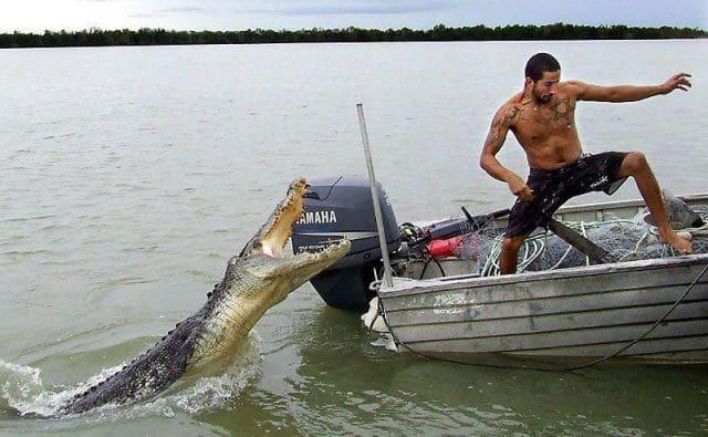 крокодил нападает на лодку с мужчиной