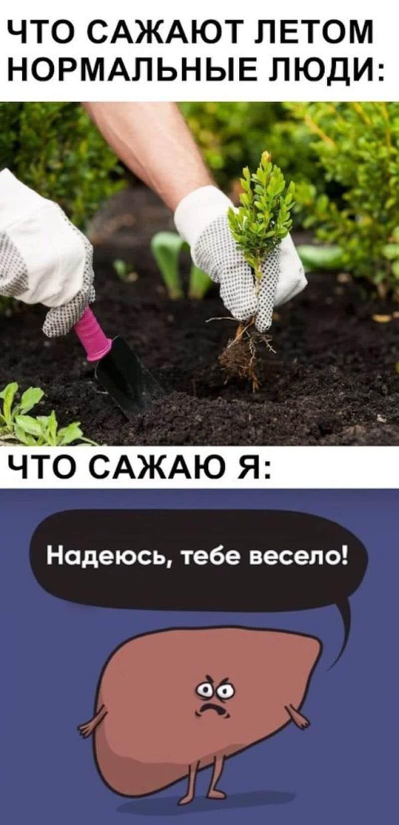 auto_07-22podborka_vecher_05_8_800x1654.jpg
