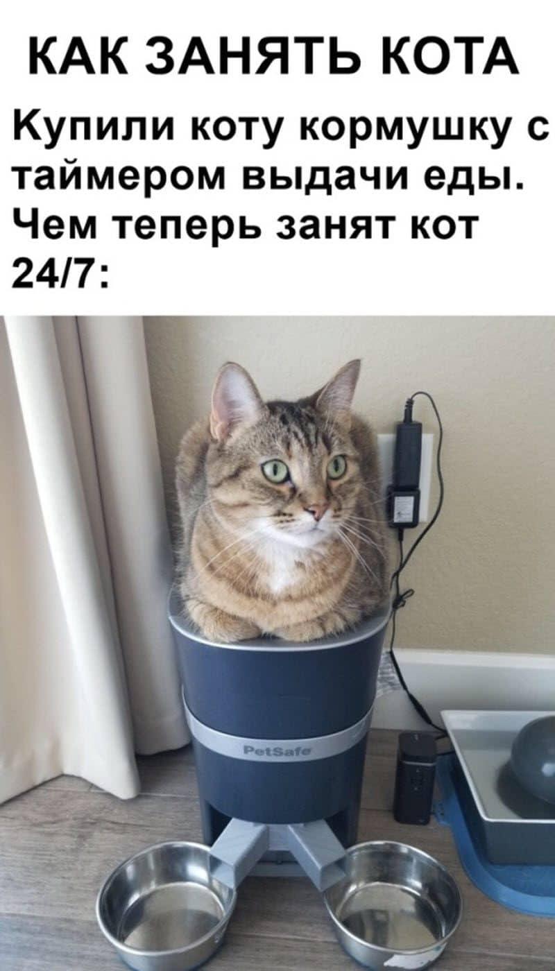 auto_07-22podborka_vecher_06_7_800x1400.jpg