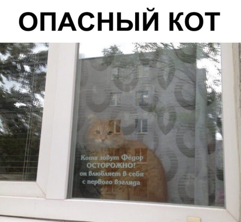 auto_09-28podborka_vecher_07_2_800x738.jpg