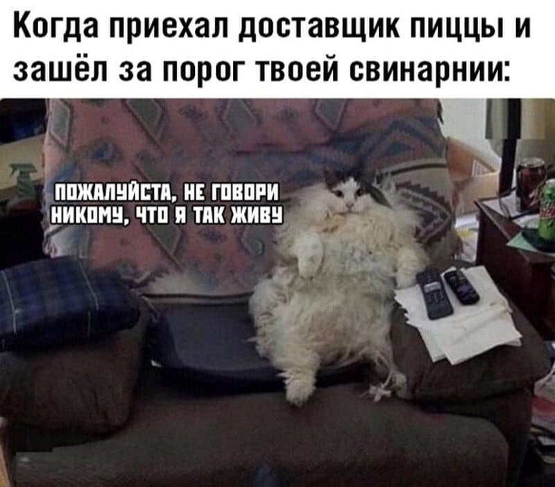 auto_15-071_14_4_800x702.jpg