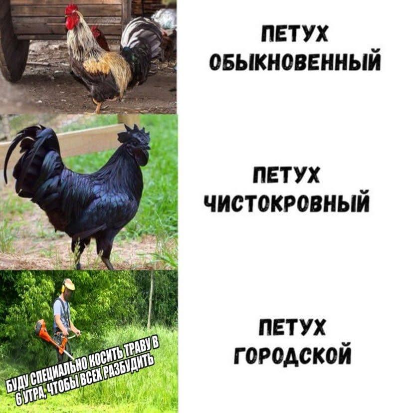 auto_15-07podb_vecher_15_2_800x828.jpg