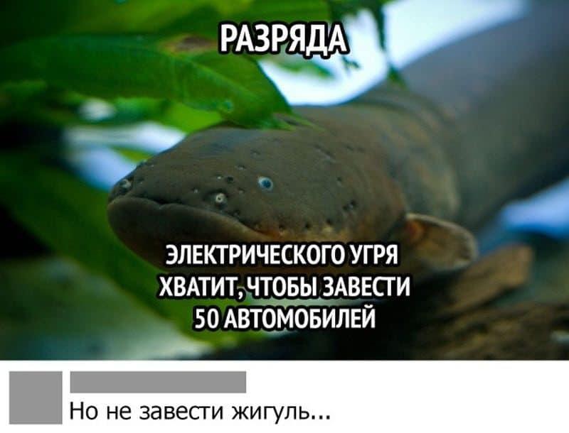 auto_17-07podborka_vecher_27_1_800x610.jpg