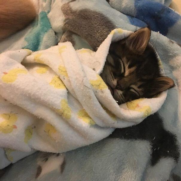 котенок спит в пеленке
