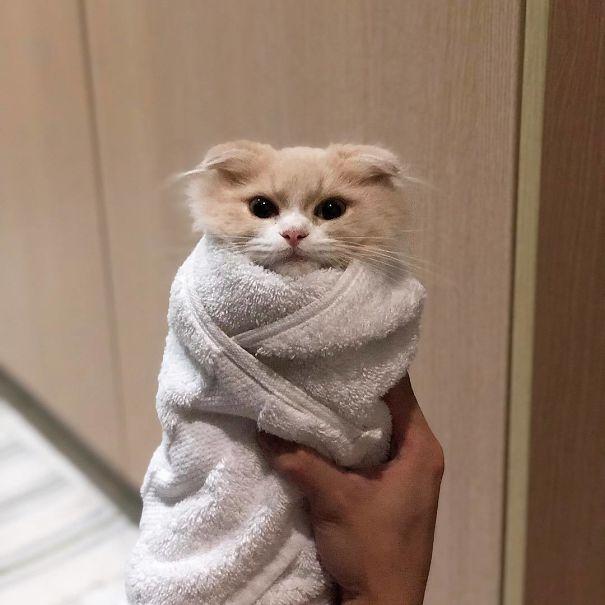 котенок в белом полотенце