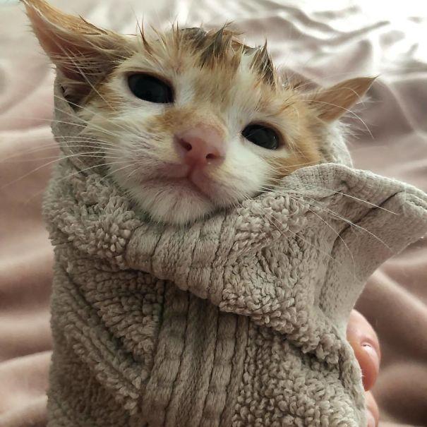 котенок завернутый в полотенце