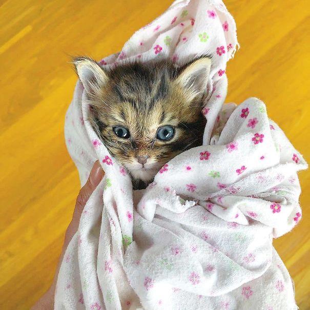 котенок в пеленке