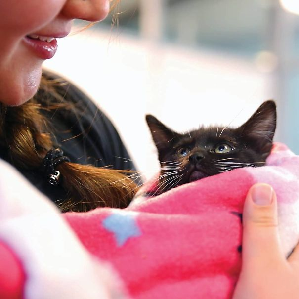 черный котенок в розовом одеяле
