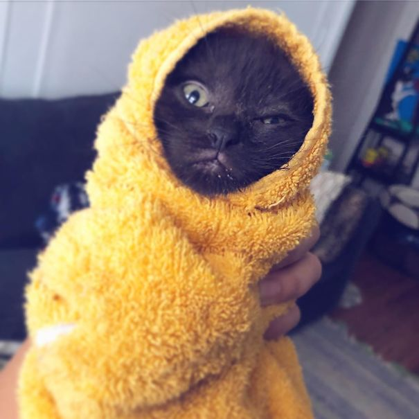 черный котенок в желтом полотенце