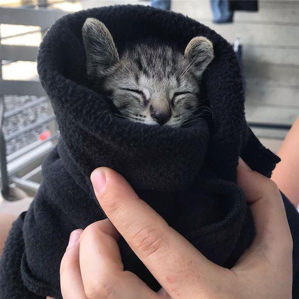 серый котенок в черном полотенце