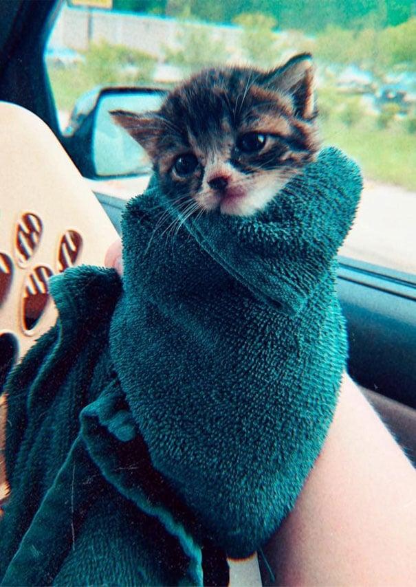 котенок в зеленом полотенце
