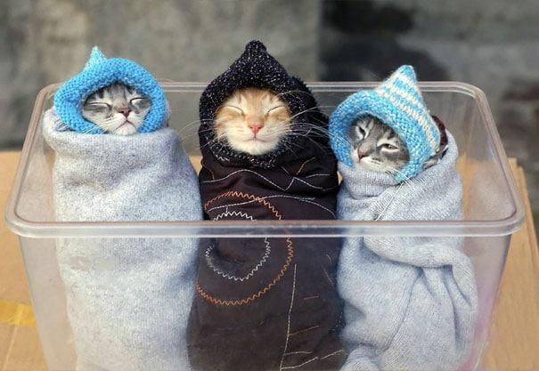 коты в шапочках и полотенцах