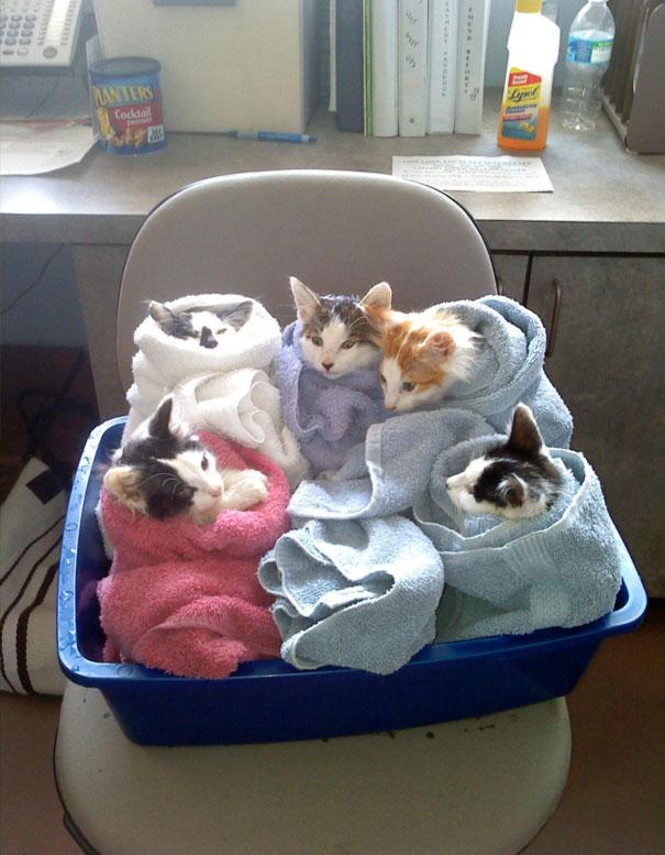 коты в полотенцах
