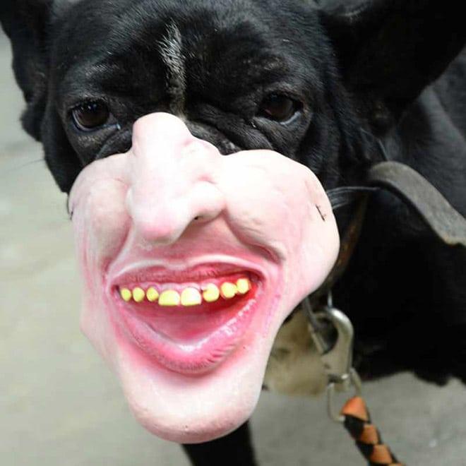 человеческая маска на собаке