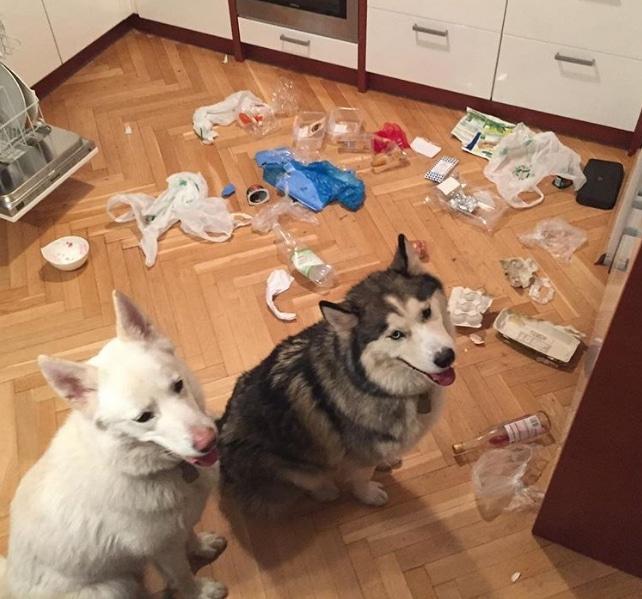 собаки в кухне на полу