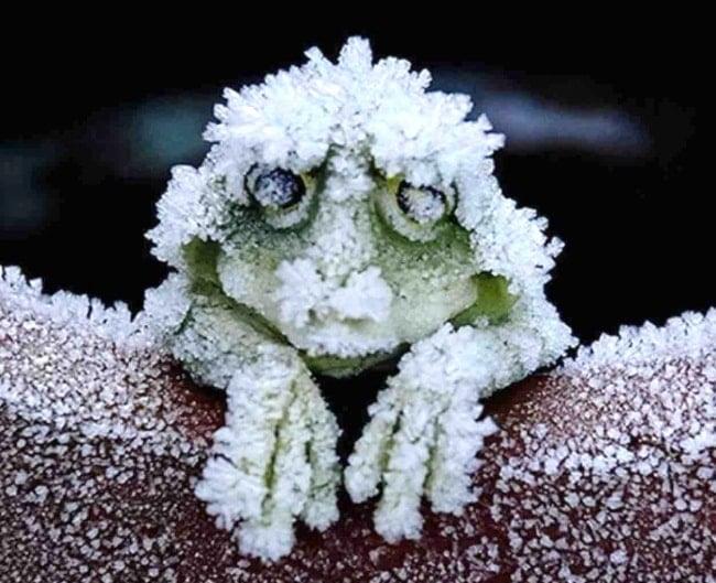 замерзшая лягушка