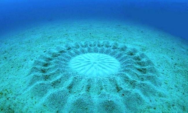 гнездо рыбы на морском дне