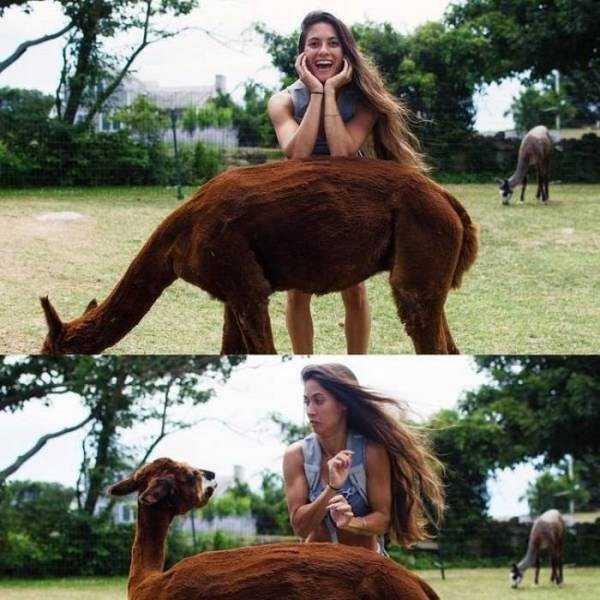 девушка оперлась на спину животного