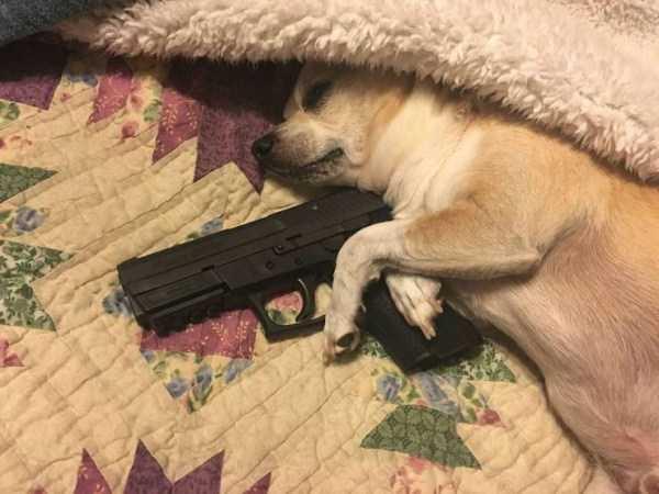 собака с пистолетом