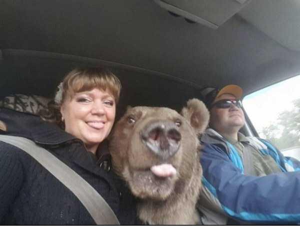 медведь в салоне авто