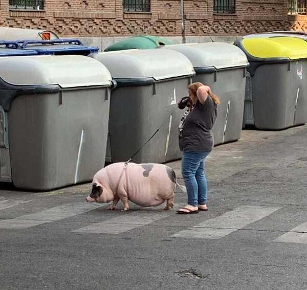 женщина со свиньей возле мусорных баков