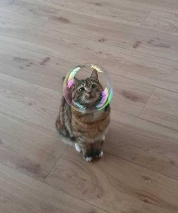 мыльный пузырь и полосатый кот