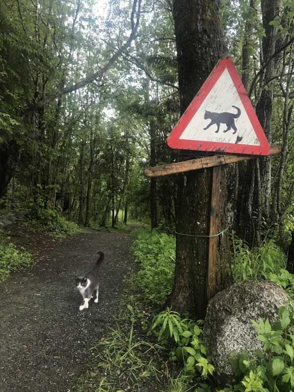кот идет по лесу