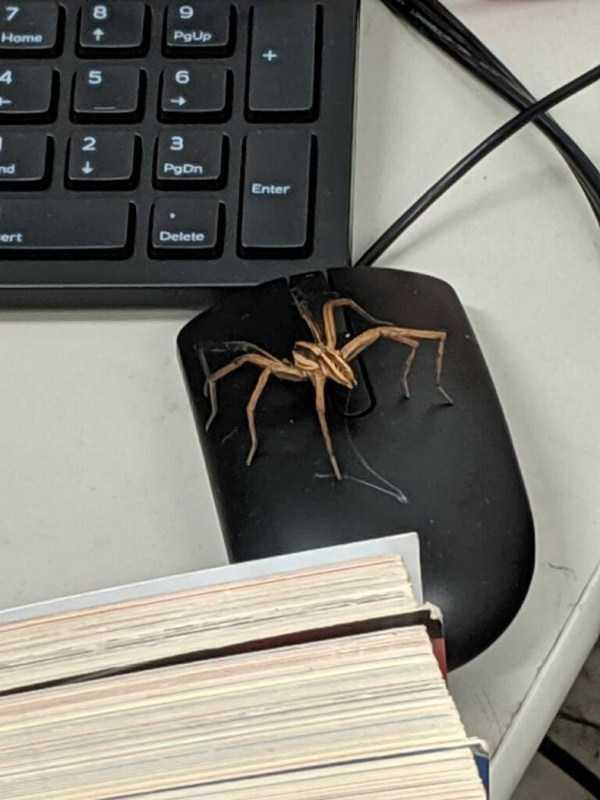 паук сидит на компьютерной мышке