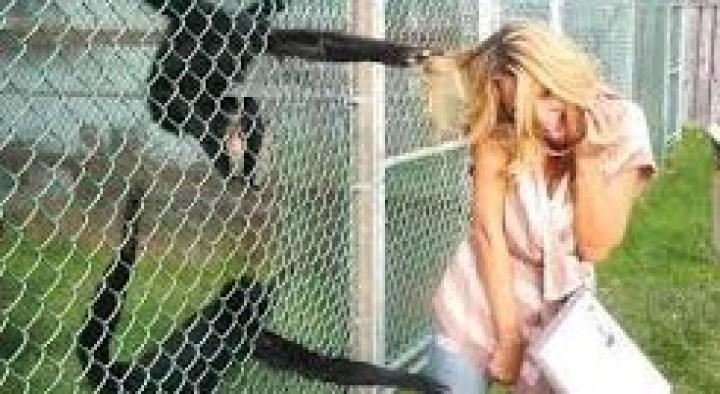 обезьяна тянет блондинку за волосы