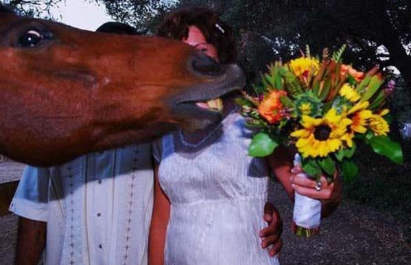 лошадь тянется к букету невесты