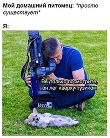 Прикольные и смешные картинки от Димон за 28 июня 2019                      Интересное