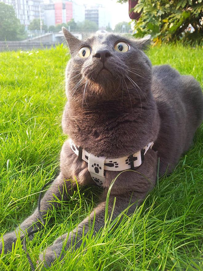 серый испуганный кот на улице