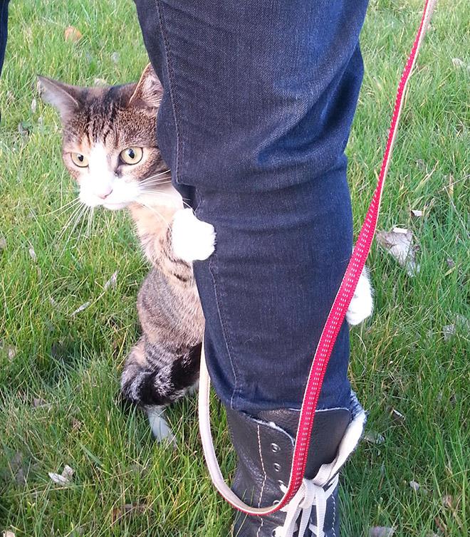кот прячется за ногой у хозяина