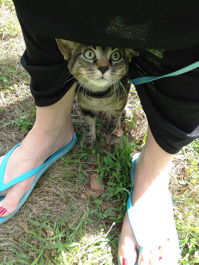 кот сидит под ногами у женщины
