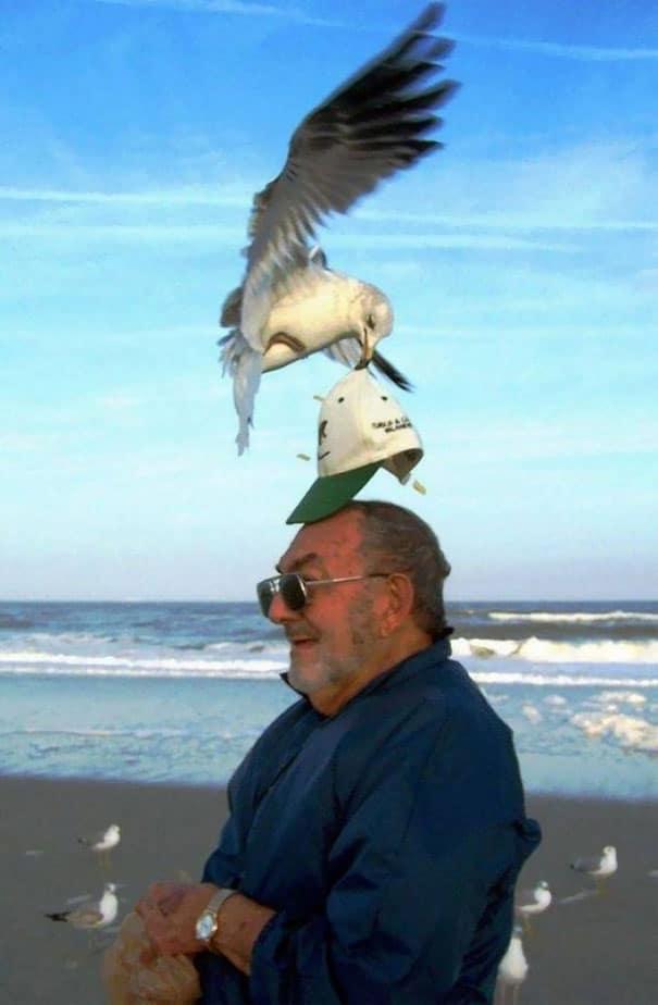 чайка ворует кепку с головы мужчины