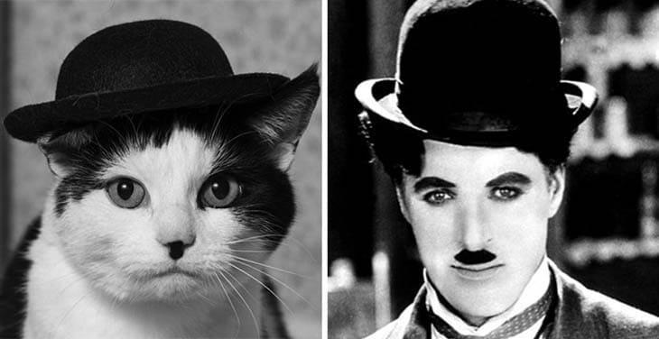 кот в шляпе и чарли чаплин