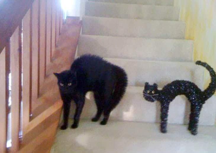 черный кот на ступеньках